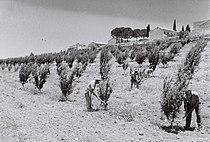 Kfar Etzion 1947.jpg
