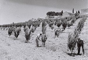 Gush Etzion - Kfar Etzion, 1947