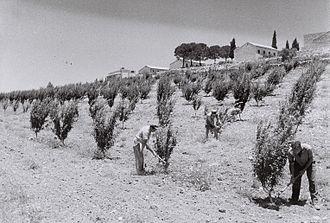 Kfar Etzion - Kfar Etzion, 1947