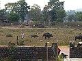 Khajuraho 83 2015in03kjrh 140 (40522320391).jpg