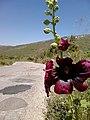 Kifisia, Greece - panoramio (27).jpg