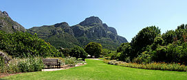 View roughly to the north from Kirstenbosch. The eastern faces of Table Mountain dominate the skyline. The rainfall on this side is much higher than on the other faces, hence the dense vegetation