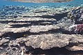Korallen im Roten Meer..DSCF3895OB.jpg