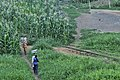 Kumasi Maisfeld Eisenbahngleis 2010 B003.jpg