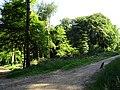 LSG Waldgebiet des Tiergartenwaldes PM-18-08.jpg
