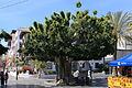 La Palma - Los Llanos - Calle Real + Plaza de España 01 ies.jpg