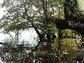 Lago di Bracciano (14897869545).jpg