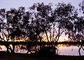 Lake Cargelligo Dawn - panoramio.jpg