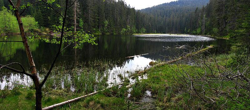 File:Lake Laka - Šumava.jpg