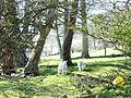 Lambs at Bryn Fuches Farm - geograph.org.uk - 736615.jpg