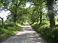 Lane to Kilcullen near Inistioge, Co. Kilkenny - geograph.org.uk - 205277.jpg