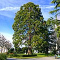 Lausanne - panoramio (168).jpg