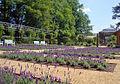 Lavendelgarten-Guetersloh-2.jpg