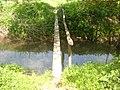 Laying the river Lyubushka.JPG