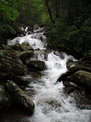 Rainbow Falls Trail - LeConte Creek after heavy rainfall