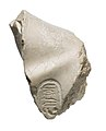Left shoulder with Aten cartouches, possibly from Akhenaten or Nefertiti prostrate MET 57.180.33 view 1.jpg