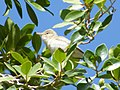 Les oiseaux d'Egypte - panoramio - youssef alam (2).jpg