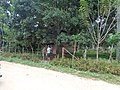 Libertad, Kaputian, Island Garden City of Samal, Davao del Norte, Philippines - panoramio (1).jpg