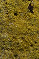 Lichen (41542770182).jpg
