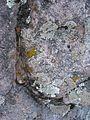 Lichen garden - Flickr - brewbooks.jpg