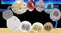Life cycle of Amyloodinium ocellatum.png