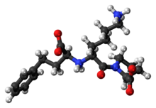 Ball-and-stick model of the lisinopril zwitterion