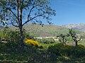 Losar 20090408a.jpg