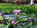 Lotus flowers near the entrance.JPG