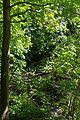Lueneburg IMGP9700 wp.jpg