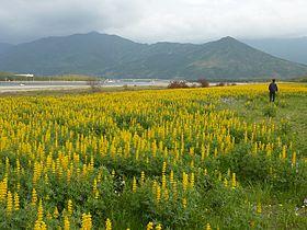 東串良町とは - goo Wikipedia (ウィキペディア)