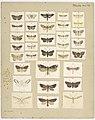 MA I437905 TePapa Plate-XLIV-The-butterflies full.jpg