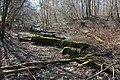 MA Waldpark Schlauch.jpg