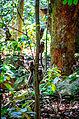 Macacos no Parque Estadual da Chacrinha.jpg