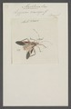 Machtima - Print - Iconographia Zoologica - Special Collections University of Amsterdam - UBAINV0274 040 04 0040.tif
