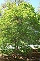 Magnolia x Betty 5zz.jpg