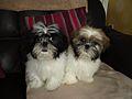 Maisie & Rosie.jpg