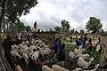 Mali goat roundup 2008.jpeg