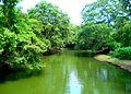 Malwatu River in the North Central Province of Sri Lanka.jpg