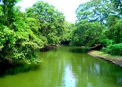 Malwatu River in the North Central Province of Sri Lanka.jpg