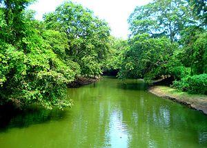 Malvathu River - Malwathu River, near Anuradhapura