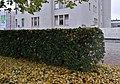 Mannerheim Park Oulu 20170928.jpg