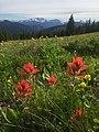 Manning Park sub-alpine meadows.jpg