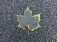 Maple Leaf (30451541305).jpg