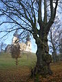 Maria Taferl Basilika mit Baum.JPG