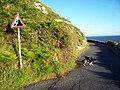 Marine Drive - geograph.org.uk - 531493.jpg