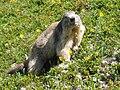 Marmotte Chamonix 2007 101 0112.JPG