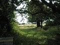 Meadow just off Marine Walk - geograph.org.uk - 1415711.jpg