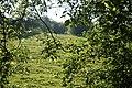 Meadows - panoramio (1).jpg