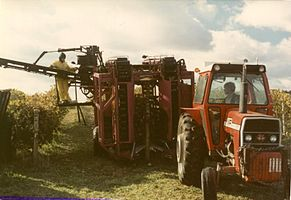 Mechanical Grape Harvester1.JPG