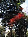 Meiji Jingu Shrine (25082859561).jpg